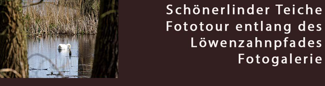 Frühling Foto Tour am Löwenzahnpfad entlang - Fotogalerie