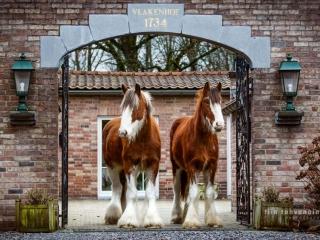 Clydesdale-ruunat Dexter ja Duke seisomassa vierekkäin belgialainen talon portin alla