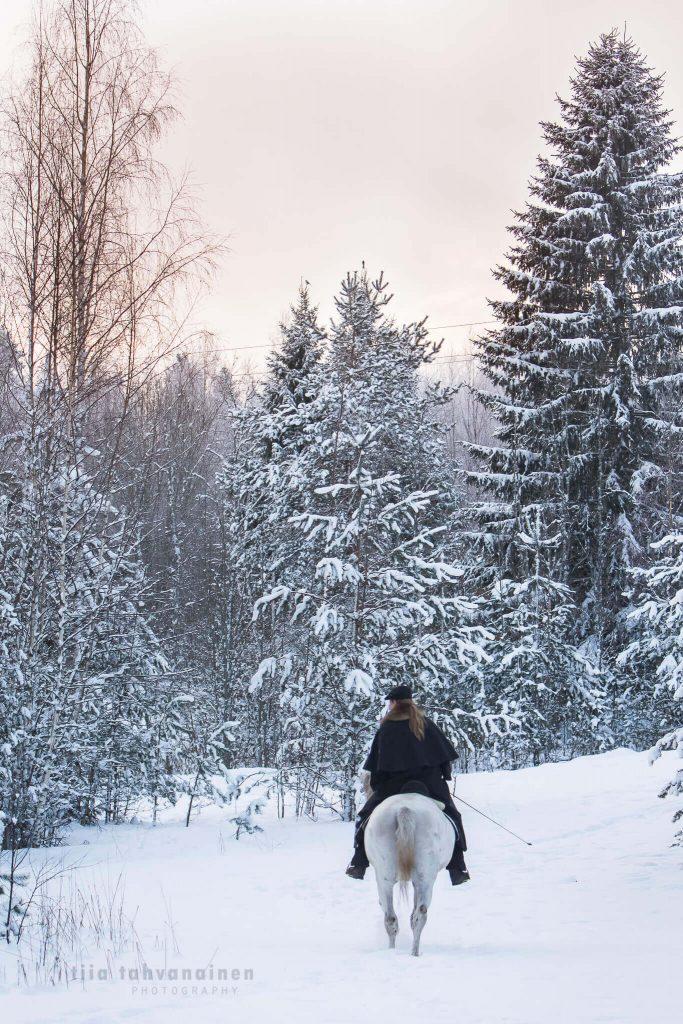 Lusitano-ori Xenon kävelemässä ratsastaja selässään lumisessa talvimaisemassa auringonlaskun värjätessä taivaan vaaleanpunaiseksi