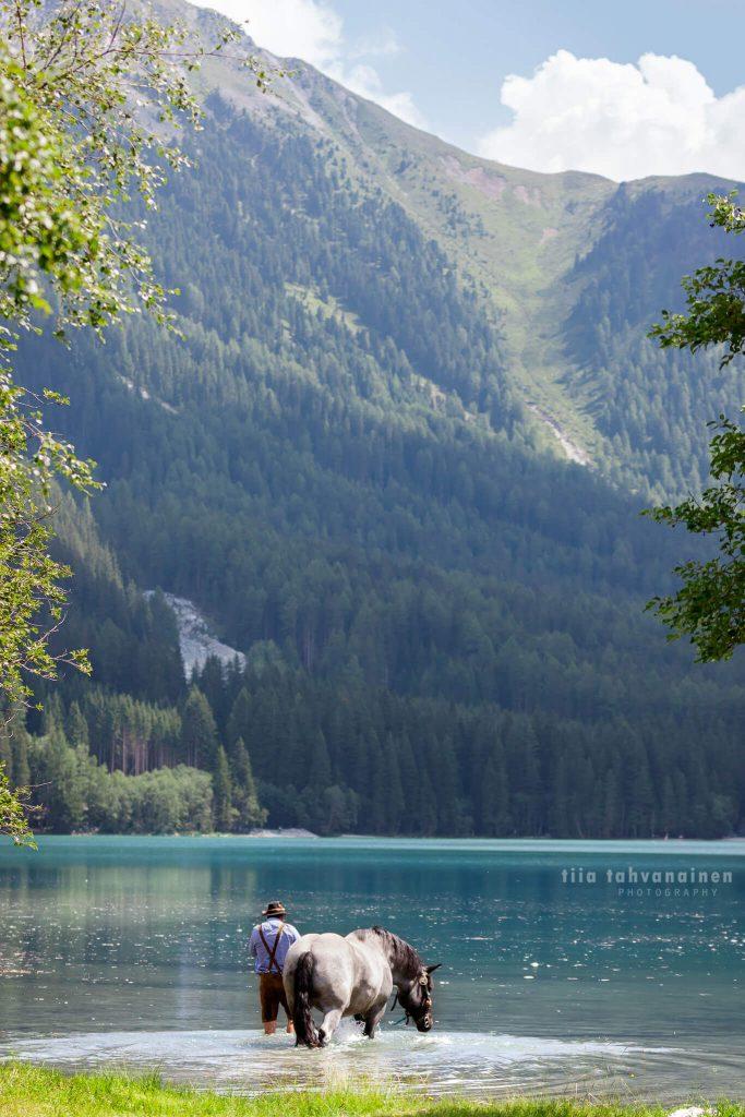 Noriker-tamma Libelle turkoosin värisessä, Dolomiittien ympäröimässä, alppijärvessä Etelä-Tirolissa, Italiassa, paikallisiin perinnevaatteisiin pukeutunut omistajan taluttaessa tammaa