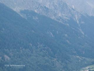 Noriker-tammat Libelle ja Vroni ravaamassa laitumellaan vuoren rinteellä Etelä-Tirolissa, Italiassa, horisontissa siintää kylä Antholz