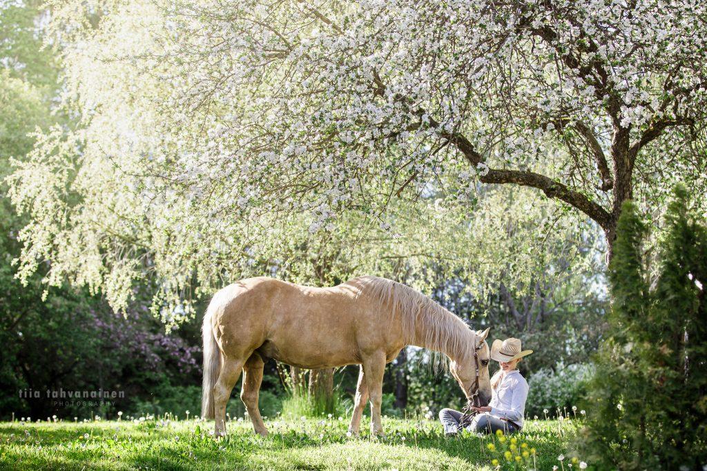 Palomino quarter-ruuna ison omenapuun katveessa, pää cowboy-hattuun pukeutuneen omistajansa sylissä auringon kauniisti paistaessa