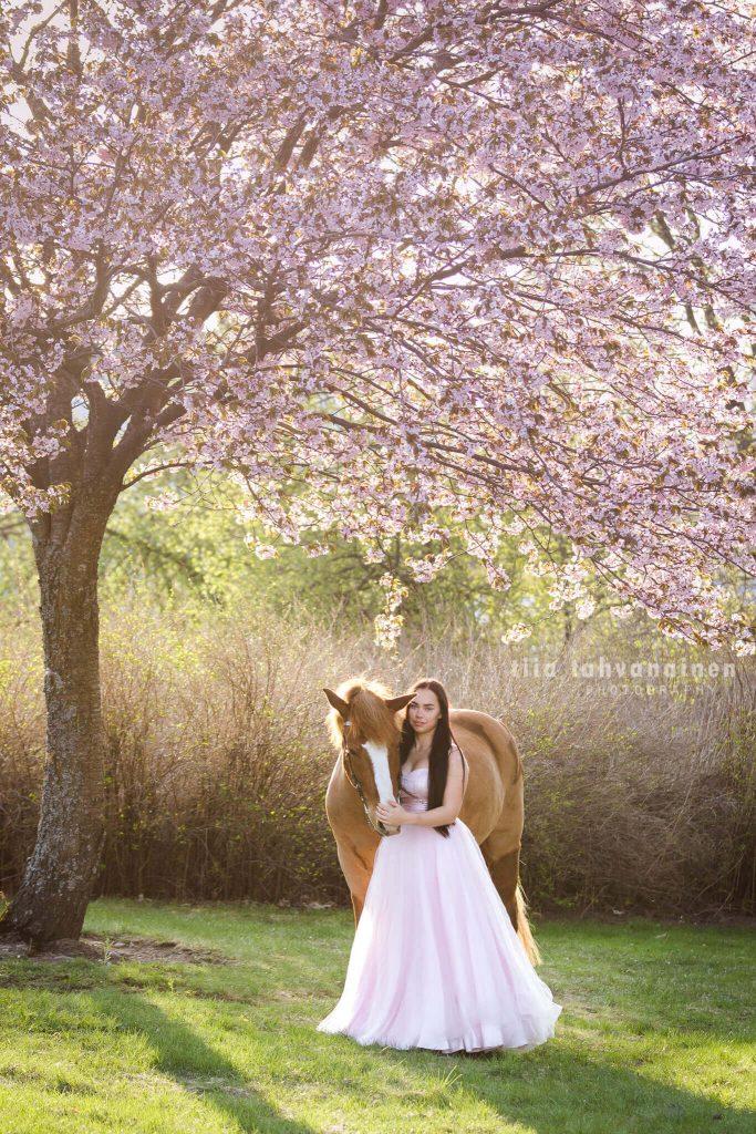 Suomenhevosruuna Usvasuon Donjuan vaaleanpunaiseen prinsessamekkoon pukeutuneen omistajansa kanssa kukkivan kirsikkapuun alla