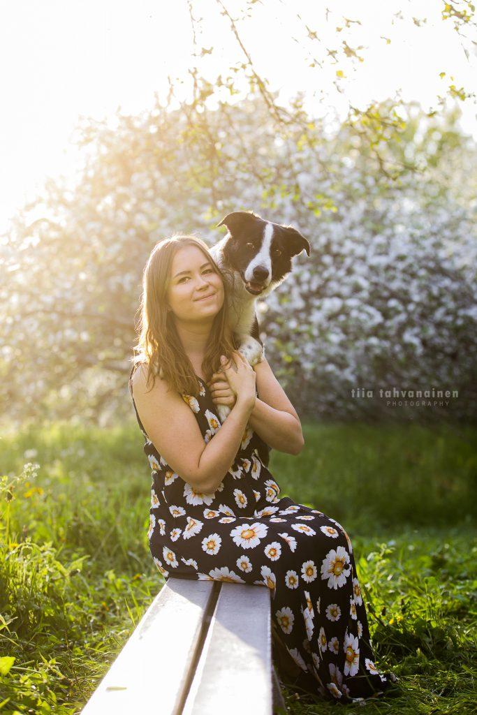 Bordercollie Jymy kukkamekkoon pukeutuneen omistajansa olkapäillä omenapuutarhassa Malminkartanolla, Helsingissä auringon paistaessa kuvattavien takaa