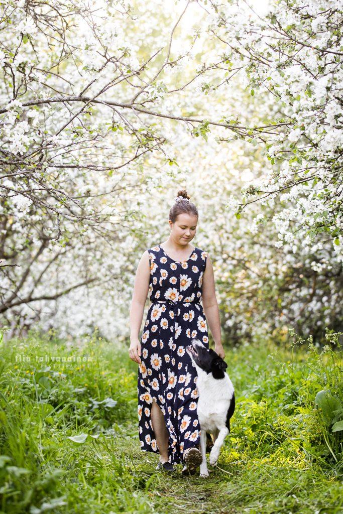 Bordercollie Jymy kävelemässä kukkamekkoon pukeutuneen omistajansa kanssa omenapuiden katveessa Malminkartanon omenapuutarhassa, Helsingissä
