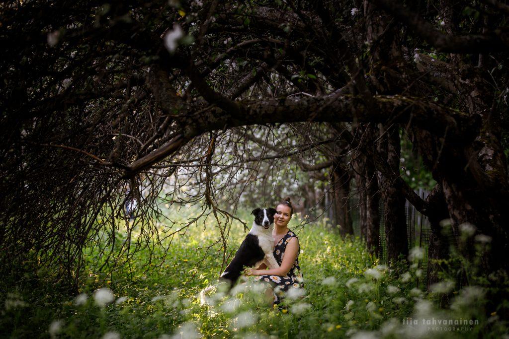 Bordercollie Jymy omistajansa sylissä Malminkartanon omenapuutarhassa, tummien puiden reunustamalla kujalla