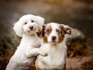 Kaverukset Vida ja Pimu halaamassa toisiaan ja tuijottamassa intensiivisesti kameraan