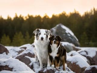 Kaverukset Velmu ja Lotte seisomassa vierekkäin kivikasalla Hyvinkäällä auringonlaskun värjätessä horisontin oranssinpunertavaksi