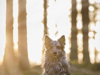 Mudi Unå metsässä istumassa vasten aurinkoa, auringonsäteiden heijastuessa puiden lomasta