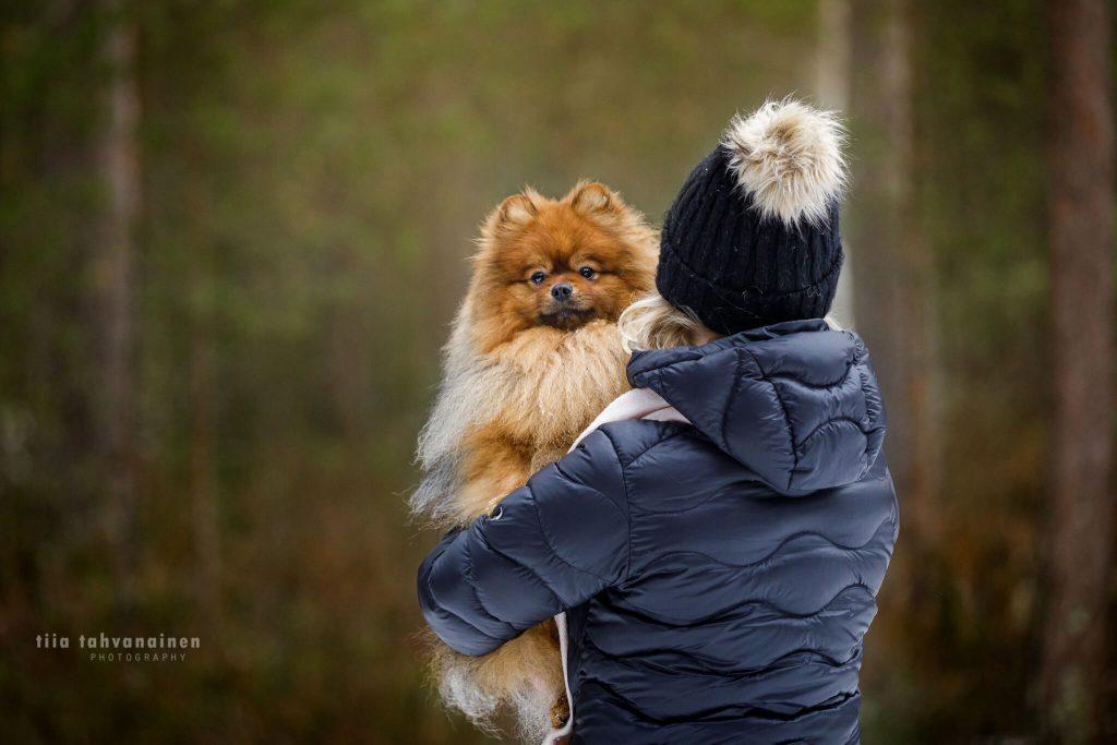Pomeranian-uros Fido omistajansa sylissä, omistaja selkä kohti kameraa