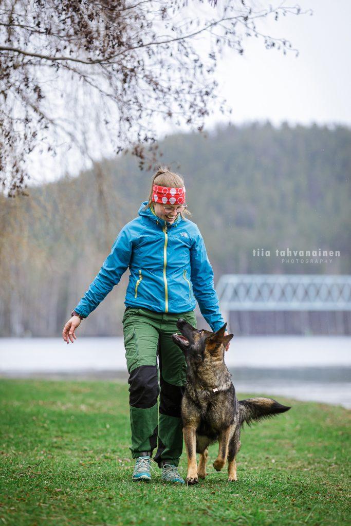Saksanpaimenkoira Armi omistajansa vierellä katse omistajaan luotuna Jyväskylän Naissaaressa