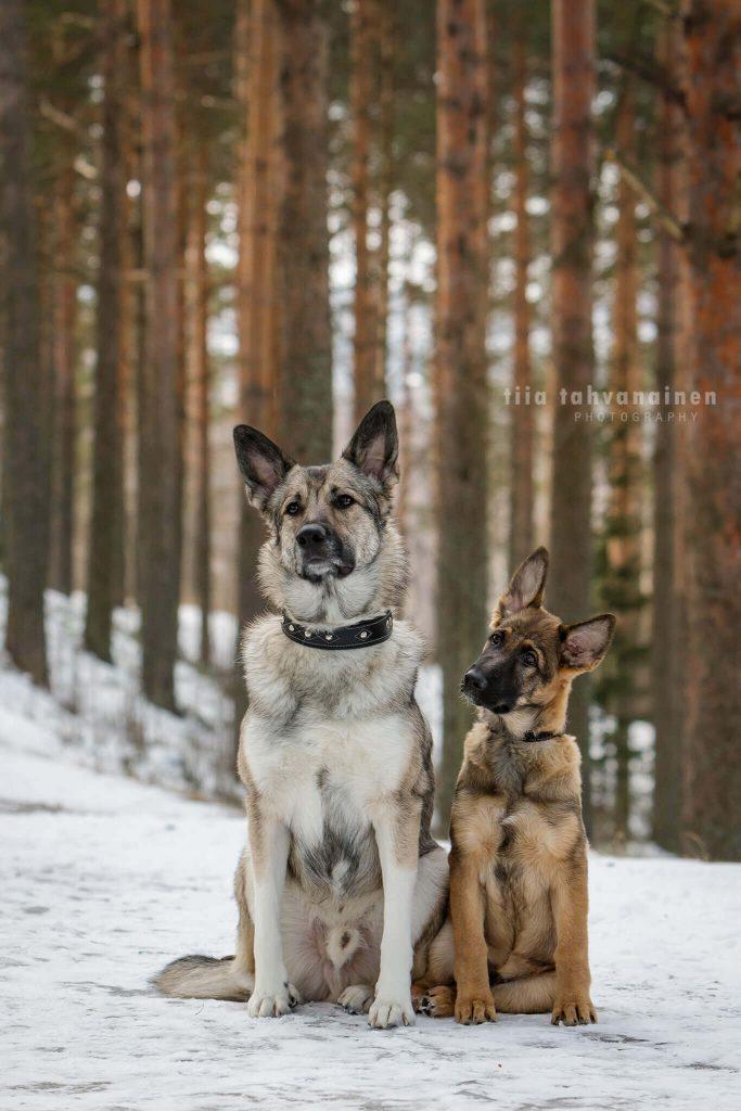 Sekarotuiset isä ja poika poseeraamassa lumisessa mäntymaisemassa Jyväskylän Harjulla