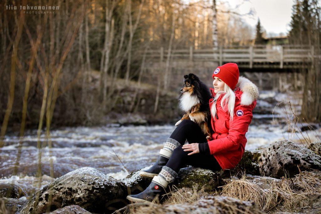 Shetlanninlammaskoira Miska omistajansa sylissä Myllykoskella Nurmijärvellä tähyilemässä kaukaisuuteen