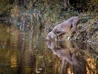 Weimarinseisoja joen penkereellä auringon värjätessä joen pinnan kultaiseksi