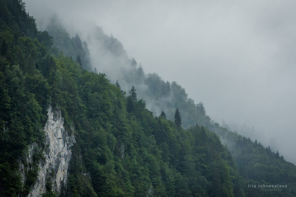 Sumuista metsää ja vuorimaisemaa Itävallasta