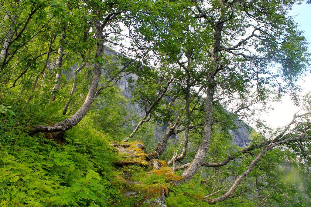 Stølsveien opp fra Simadalen er godt tilrettelagt.