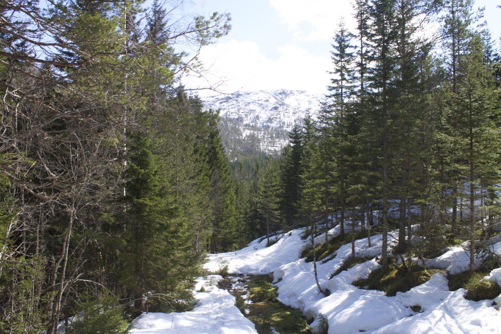Skikjøringen blir mer utfordrende når vi kommer ned i Stokkseldalen, men her ligger det normalt snø langt ut på våren.