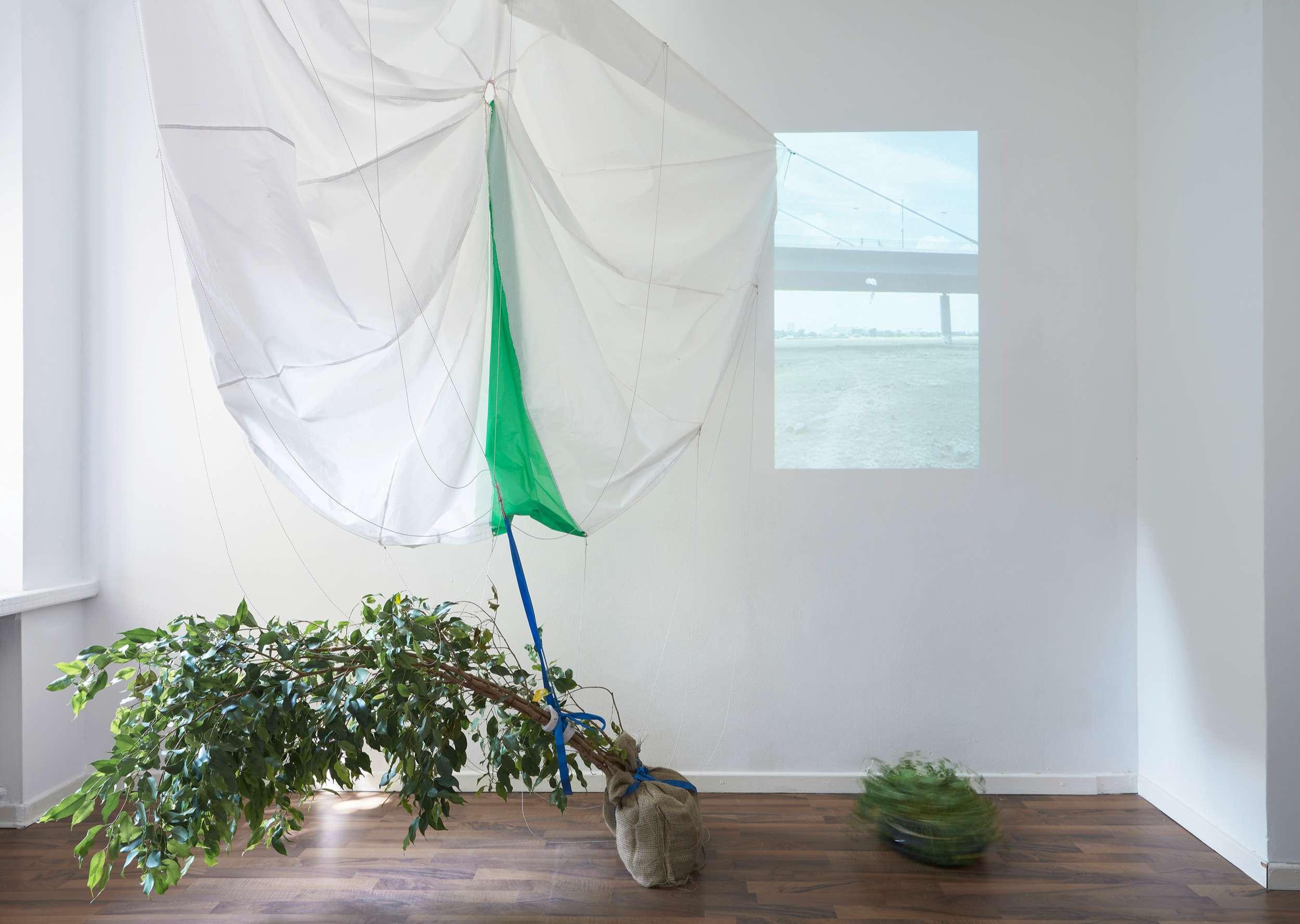 """Jukai-Ryokō, """"experiment with a ficus benjamini and a parachute"""", installation view, 2020, photo: Kai Werner Schmidt"""