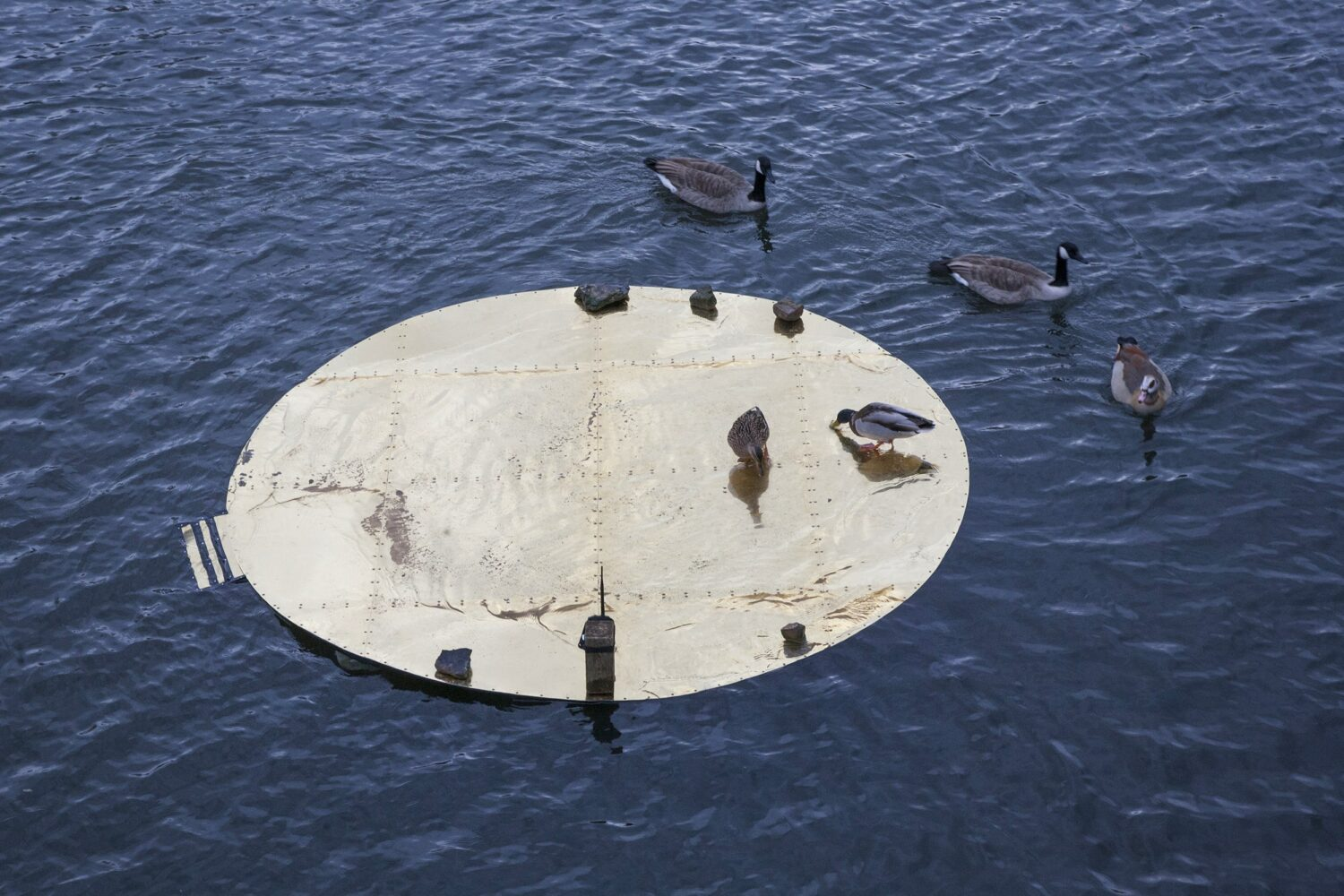 floating circles, installation view of the floating circles on the Kaiserteich, occupied by animal performers, 2019