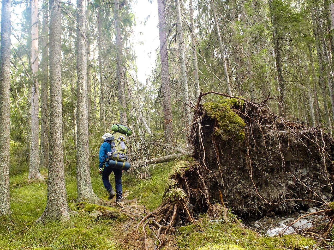 mycket-skog