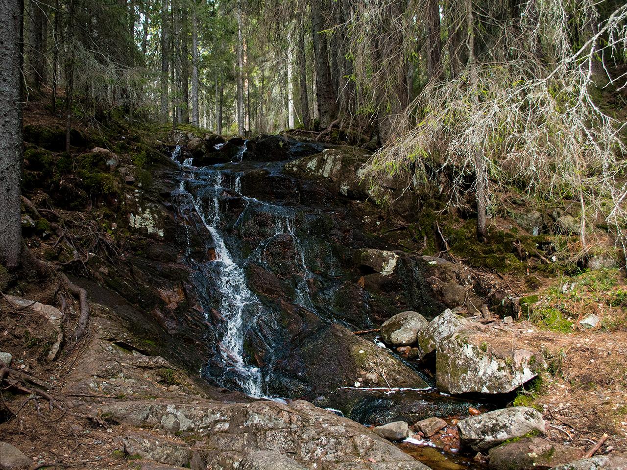 mera-skogsbäckar