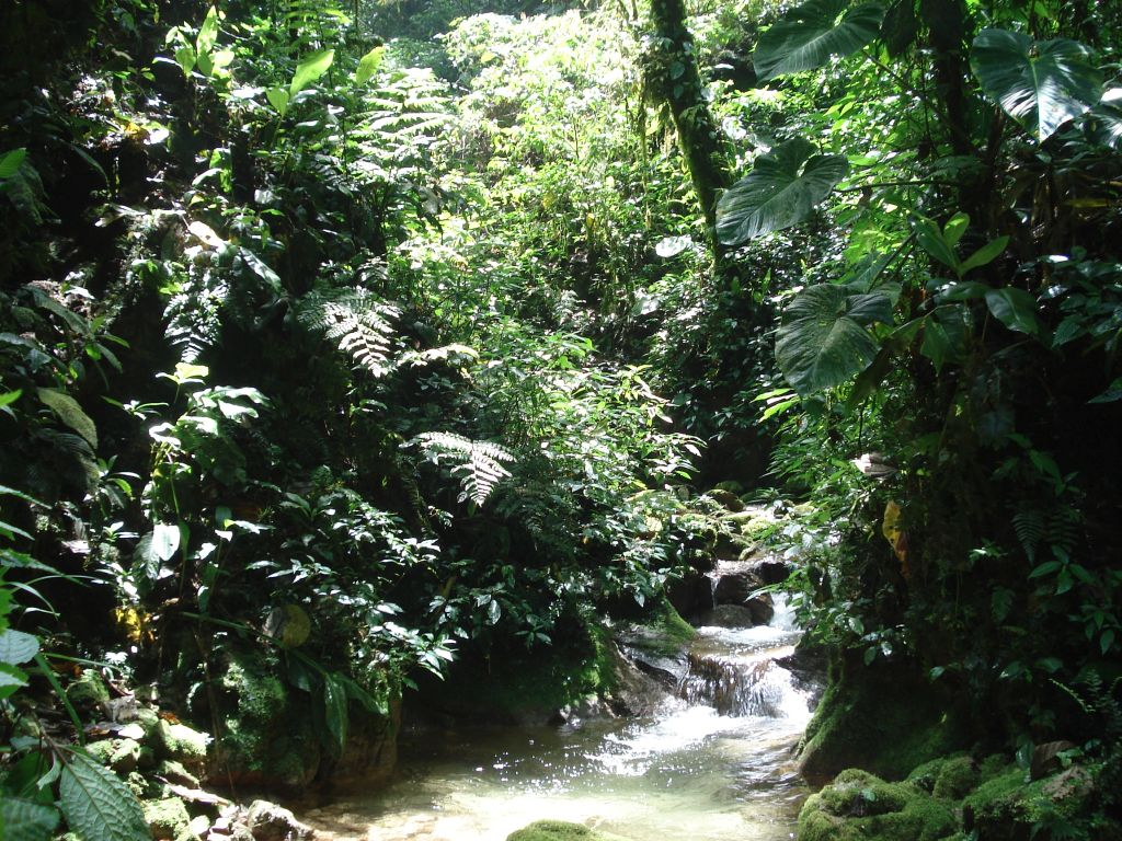 Carbon offset from rainforest at Merazonia