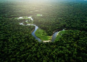 Natural reforestation in Amazon