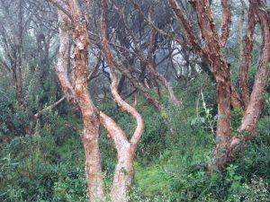 Trees in Cajas Cuenca Ecuador