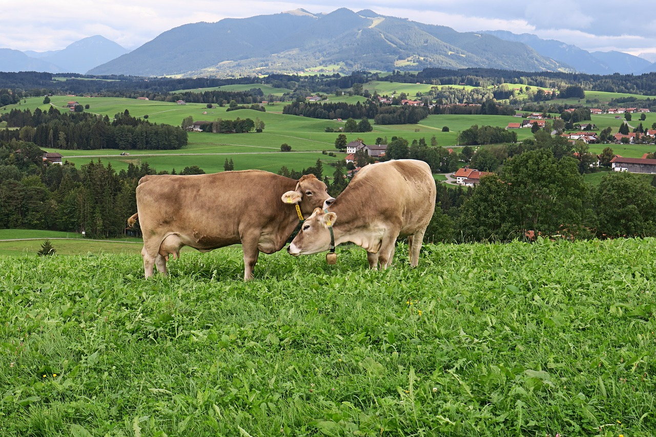 Cows outside is sustainable farming