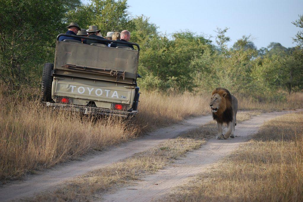 Safari wildlife tourism in Africa