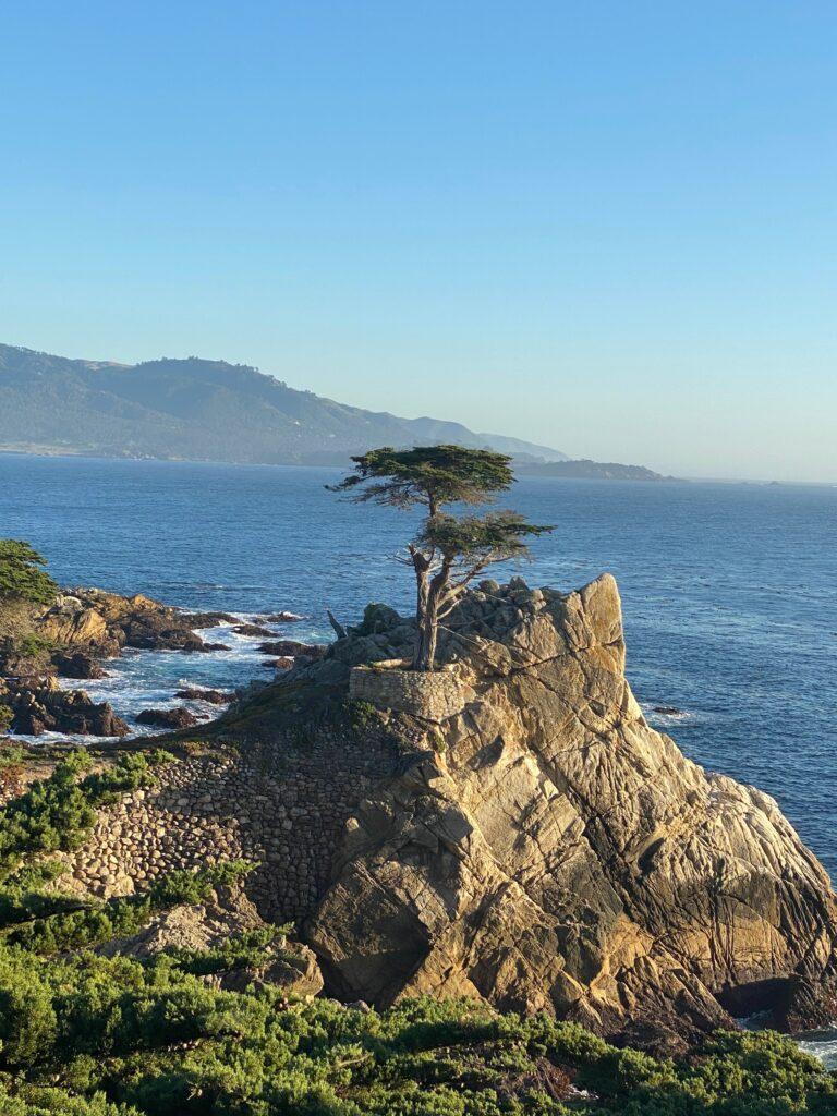 lonely cypress langs 17 mile drive california