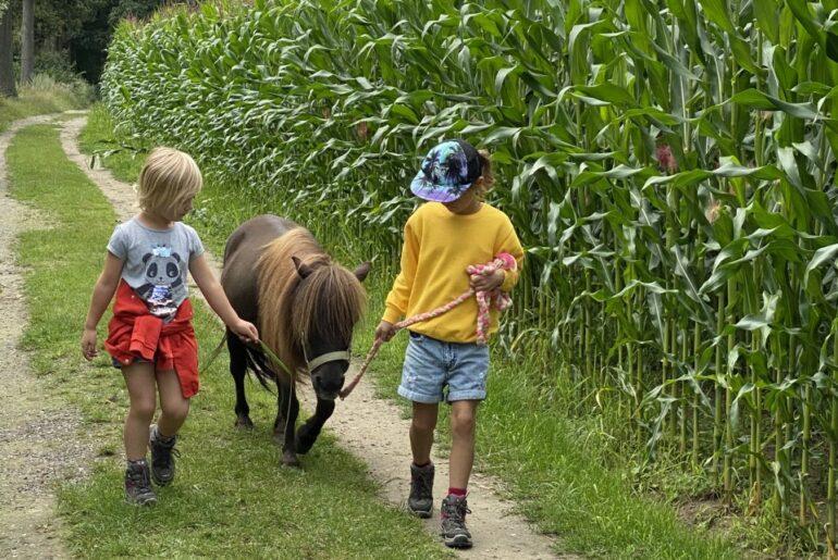Ponywandeling