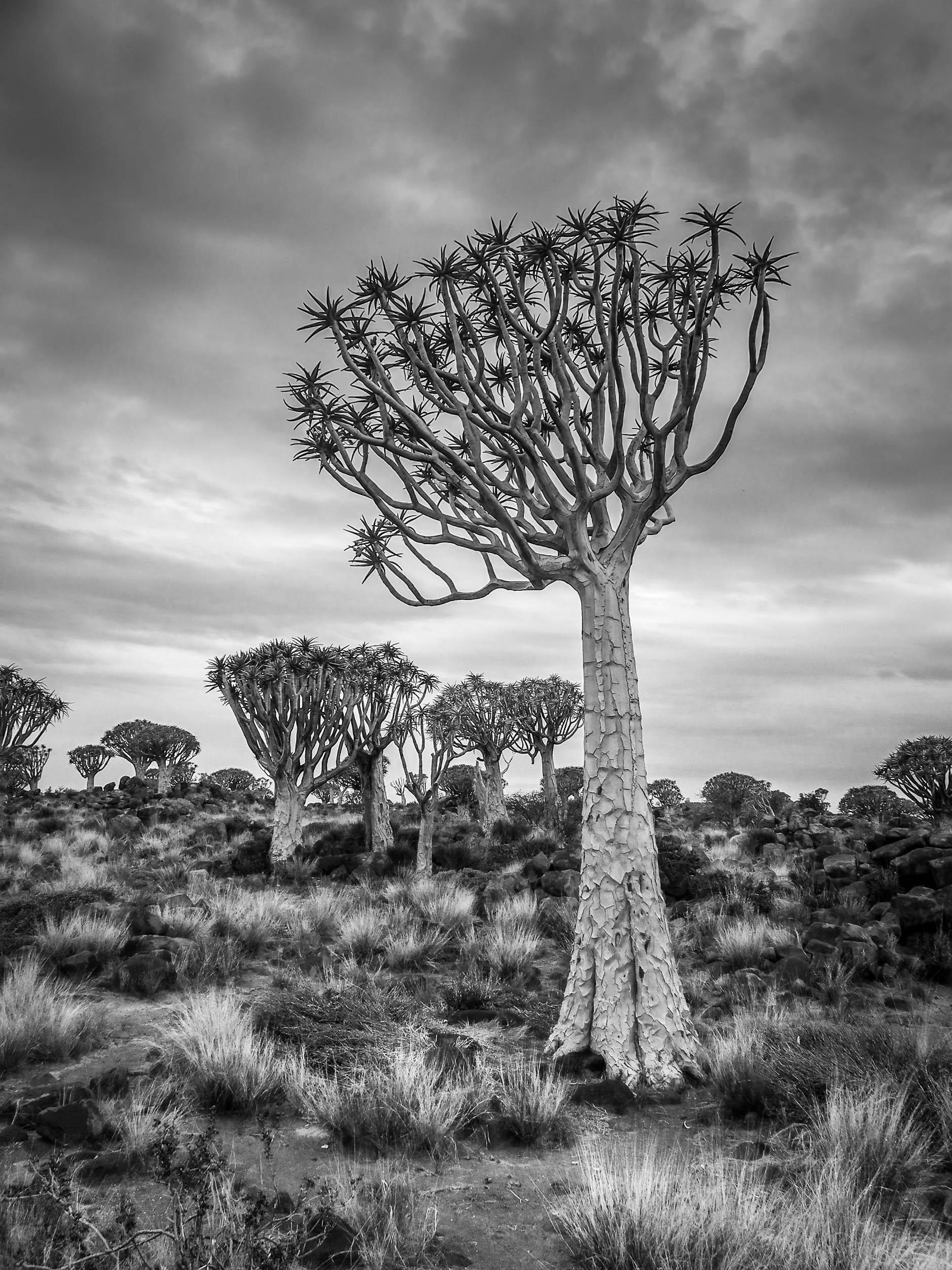 Africa – travelgeeza