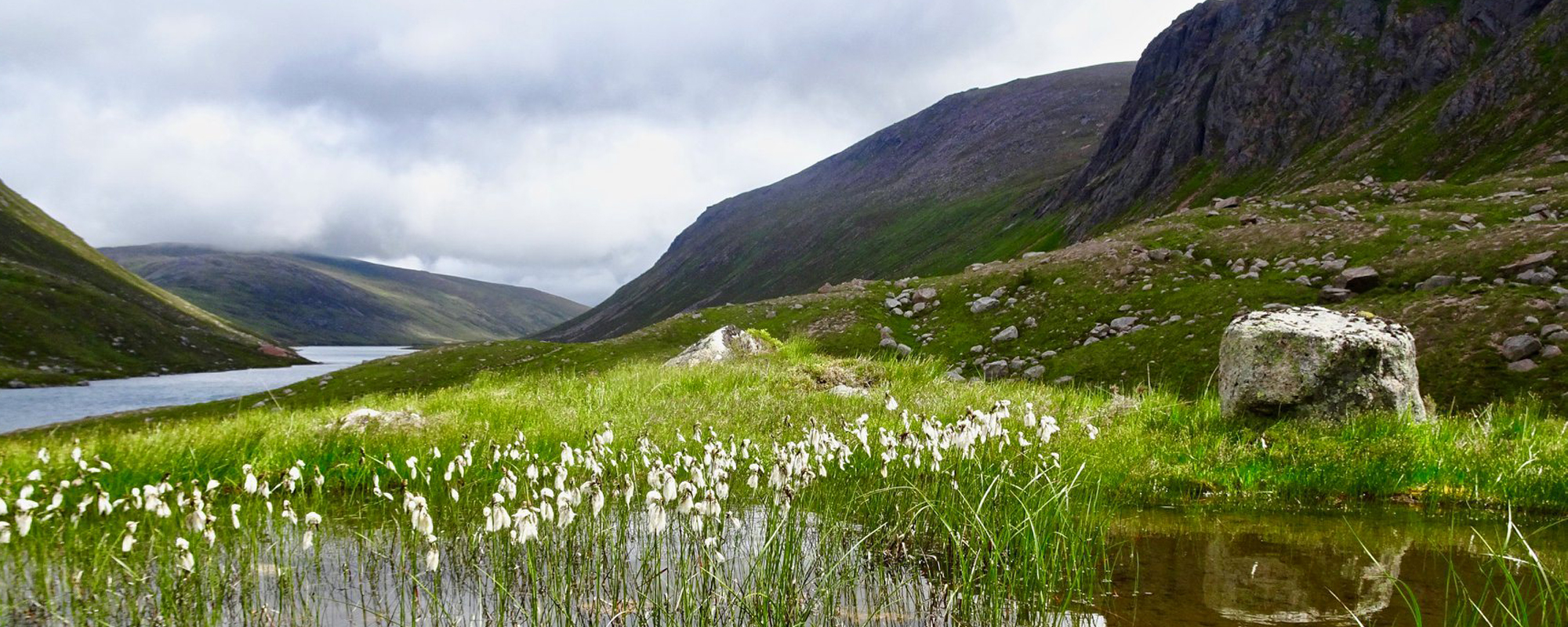 A dramatic glen in the Cairngorms with a loch and wetland with bog cotton in the foreground