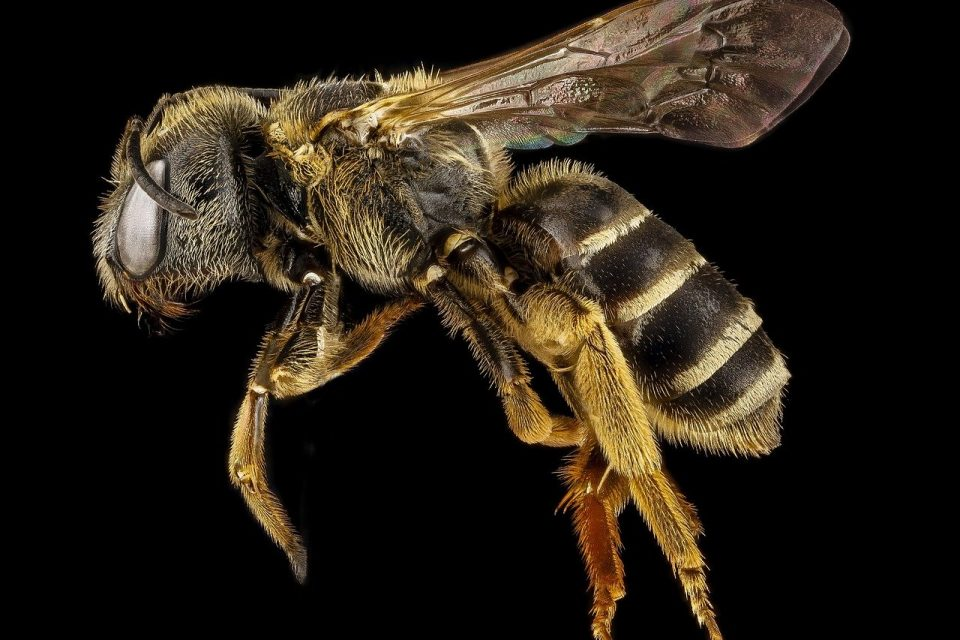 How to get rid of bees