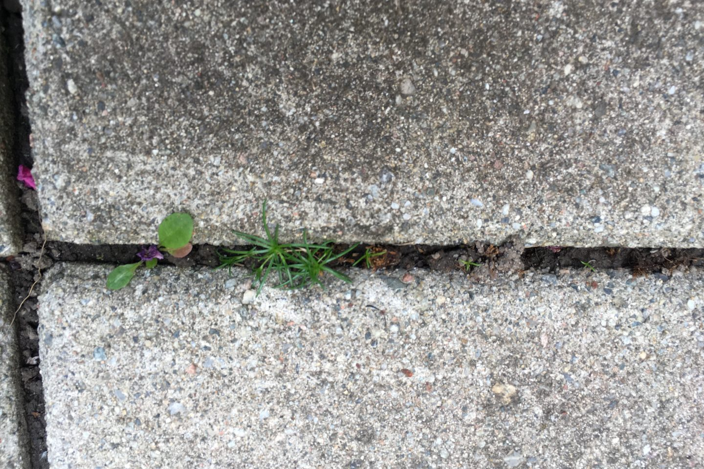 How to stop weeds from growing between pavers?