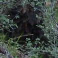While we were hiking along the PCT on Sunday, I started to think about the most dangerous thing I have seen in the seven years I have been camping and hiking with Troop 682. Let's see if you can guess what I was thinking about. Was it: A Bear? Not really dangerous as long as you don't bring food or […]