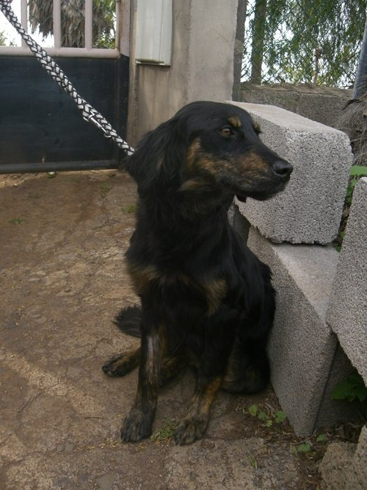 Read more about the article Nena / Retriever-Mix