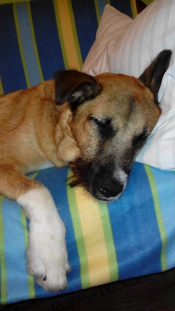 Read more about the article Alamo / Schäferhund-Mix