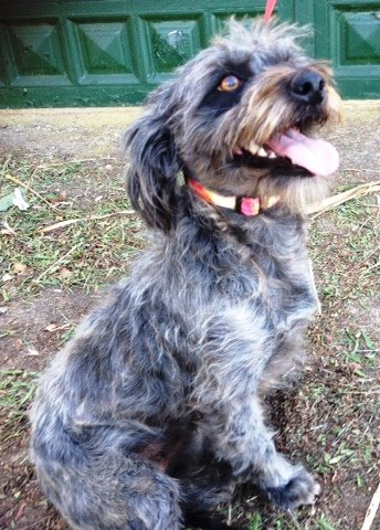 Read more about the article Jennifer / Terrier Mischling