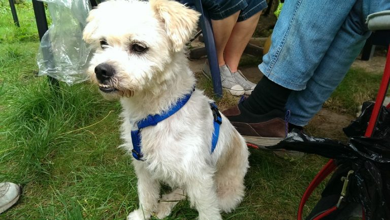 Read more about the article Bernie / Terrier-Mix