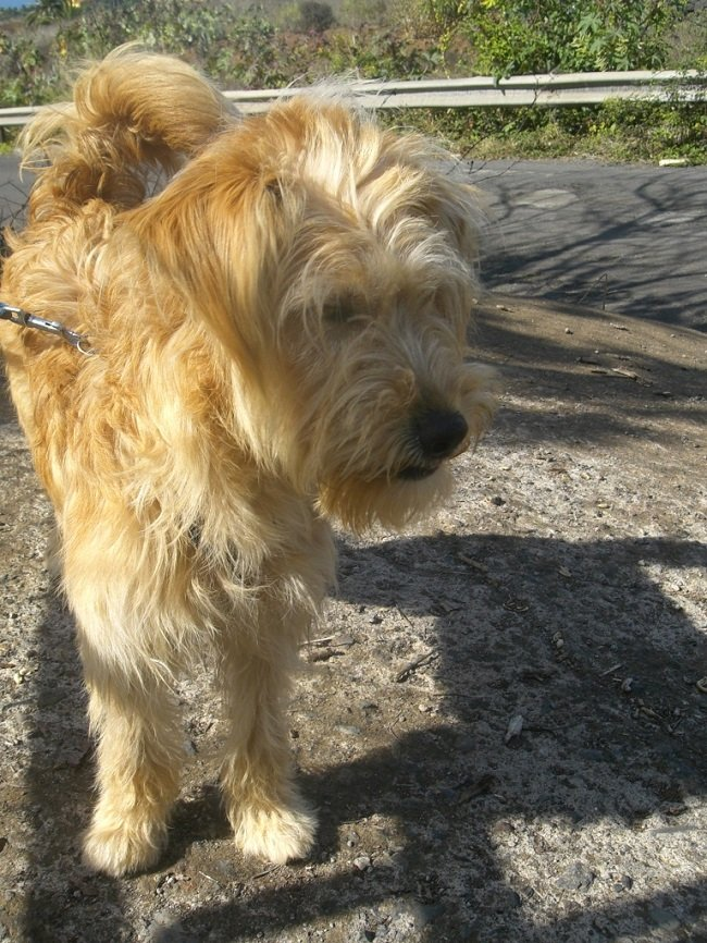 Read more about the article Cloe / Griffon-Mix