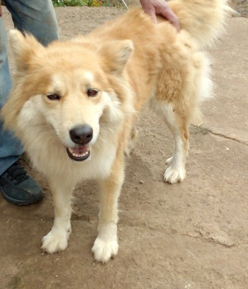 Read more about the article Luna / Collie-Mischling