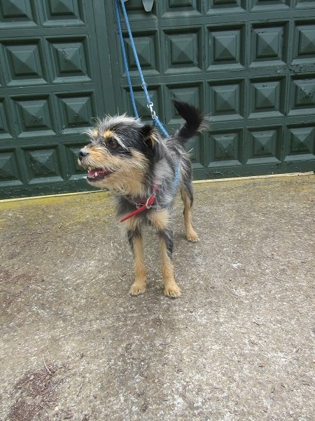 Read more about the article Fionka / Terrier-Mix