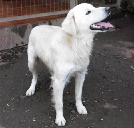 Read more about the article Leandro (jetzt Sunny) / Retriever-Mix