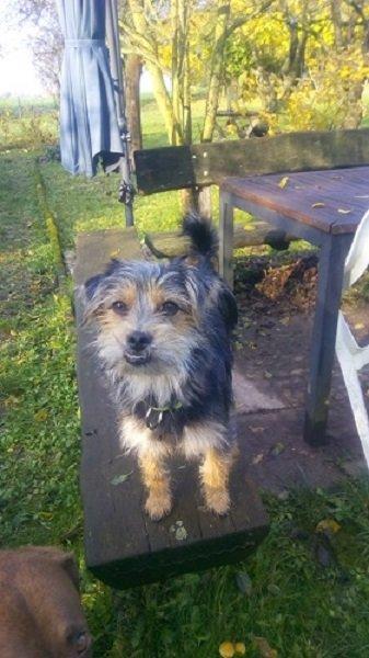 Dereck (jetzt Milo) / Terrier-Mischling