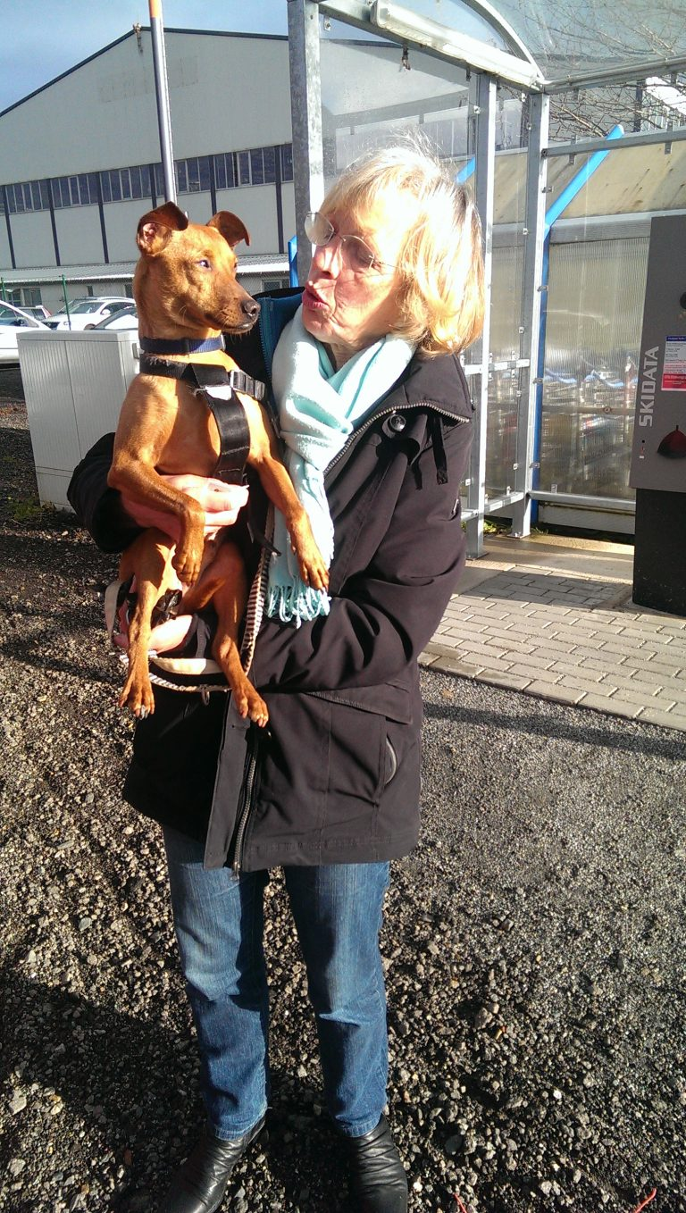 Read more about the article Sam / Pinscher
