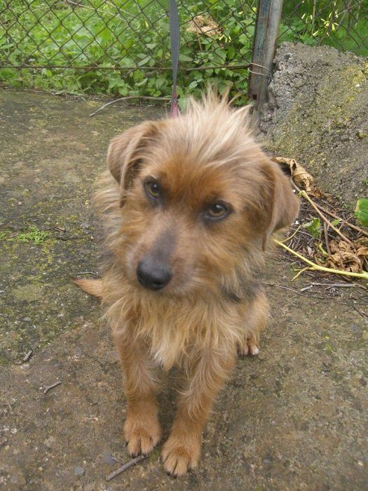 Read more about the article Fritzi / Yorki-Mix