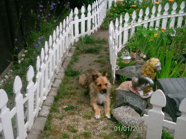 Read more about the article Hardy / Terrier-Mix