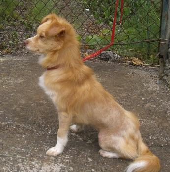 Read more about the article Simba / kleiner Mix